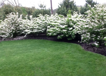 pretty-white-flowering-bushes