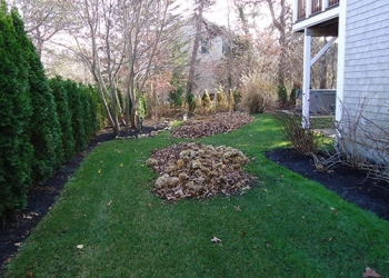 leaf-clean-up-in-progress