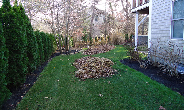 leaf clean-up in progress