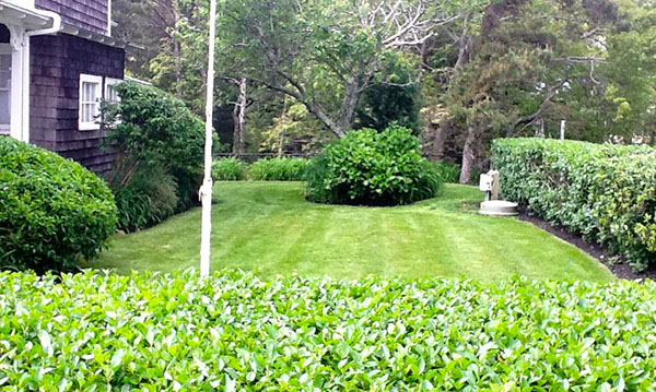 Lawn with hedge