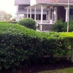 Round boxwood trim