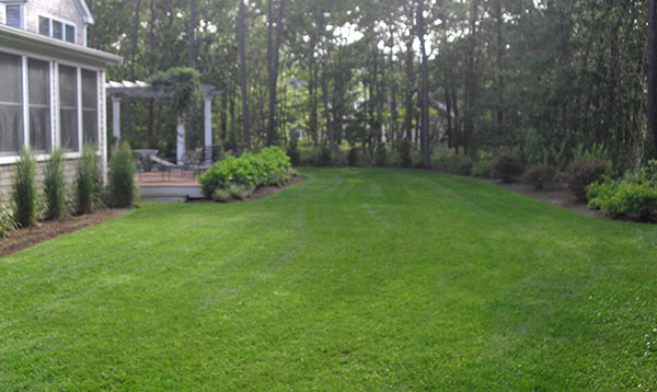 Side lawn with tree edge