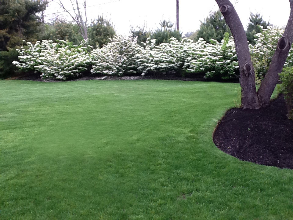 pretty white flowering bush 2